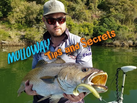 Mulloway Tips And Secrets - Beginners Guide To Using Plastics Vol 1