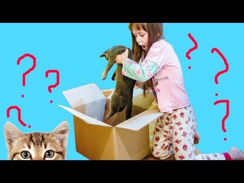 Подкинули КОТЕНКА в коробке ! Видео для детей Яна играет и кормит его
