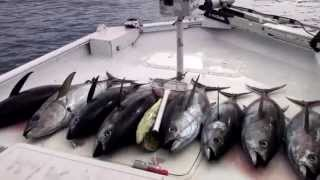 Yellowfin Tuna Bloody Yellowfin Tuna The Reel Brother Presents