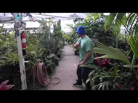 Jungle Music Palm and Cycad Nursery Video 2014