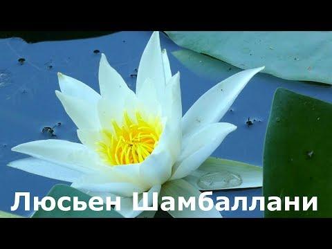 Люсьен Шамбаллани музыка для хорошего настроения и успешного дня. Природа - это красота и здоровье