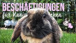 10 Beschäftigungen für Kaninchen 🐰