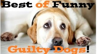 Funny Guilty Dogs Compilation 2016 ► Guilty Dogs who are sorry for what they've done :(