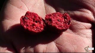 Boilies Formula Fruit 20 mm 5 kg Nash
