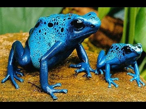 Nat Geo Wild - Most Poisonous Animals - National geographic documentary
