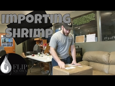 Import Order - Importing Freshwater Shrimp