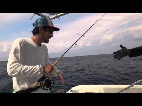 Mahi Mahi (dorado) on fly fishing 2013