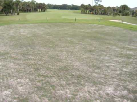 Viera East Golf Course- Srigging of the Greens with Emerald Dwarf