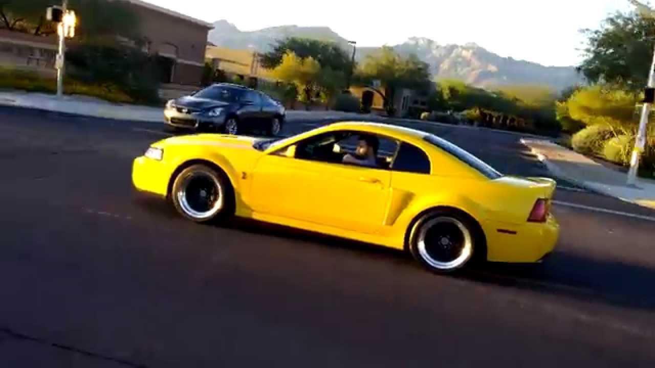 Yellow Terminator Cobra