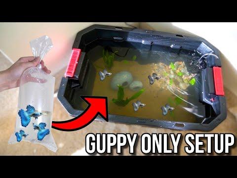 NEW GUPPY *ONLY* BREEDING FISH TANK AQUARIUM POND SETUP!