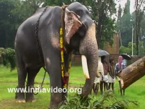 Elephant, Gajaratnam, Bastian Vinaya Sankar, Thrissur ...