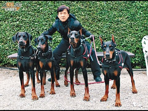Thrilling dog attack faced by Jackie Chan