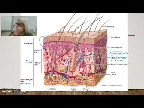 5 Minute Lesson: Appendages Of The Skin