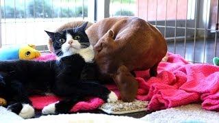Abandoned dog bonds with paralyzed cat thumbnail