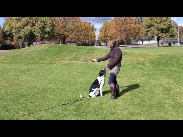 Real Dog Trainers of SLC - Parks Session in Salt Lake