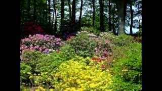 Sofiero slott när Rhododendron blommar!