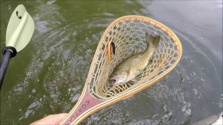 Fishing French Broad River July 3rd, 2016