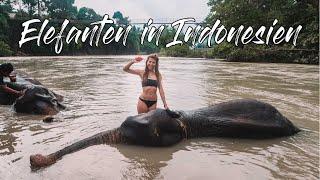 Baden mit Elefanten in Tangkahan - Sumatra Indonesien Vlog