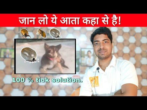 Last & Only Way To Prevention Flea And Ticks In Dog. आते कहा से है ये टिक!!🔥
