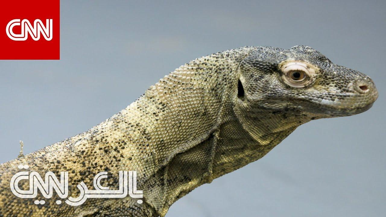 CNN عربية:لعاب هذا الحيوان يمكنه قتل إنسان خلال 24 ساعة
