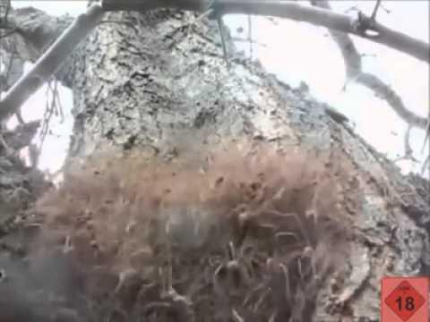 Spinnennest Entfernen