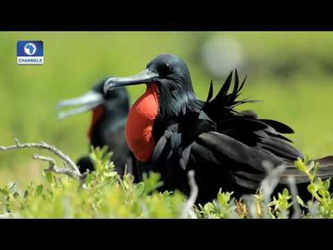 Earth File: Focus On Migratory Birds Pt. 1