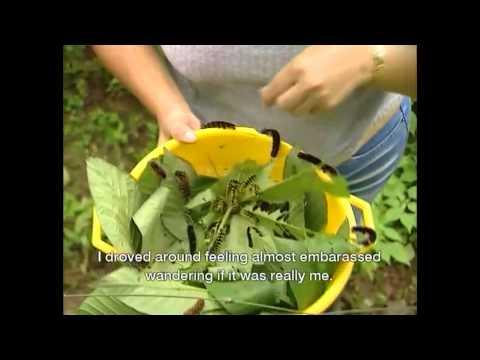 Costa Rica Entomological Supply