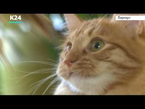 Животных начали чипировать в Алтайском крае