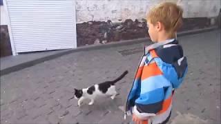 Гурзуф Крым Коляндра и шестнадцать котов