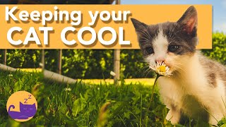 How to Keep Your Cats COOL in the Summer - HEATWAVE TIPS!