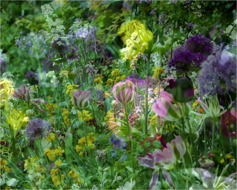 Monet\'s Garden in Giverny, France - YouTube