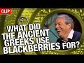 QI | What Did The Ancient Greeks Use Blackberries For?