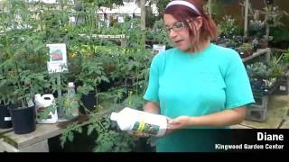 How to Plant a Fall Tomato Garden