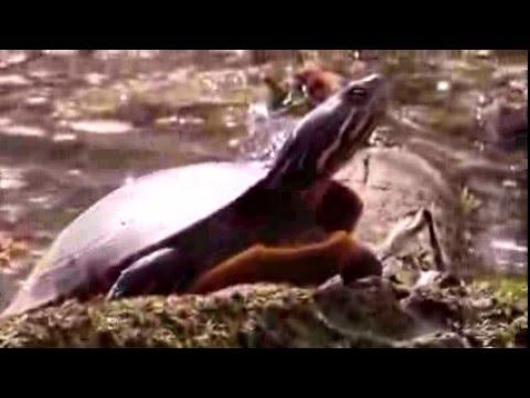 Hiking Pennsylvania: John Heinz National Wildlife Refuge