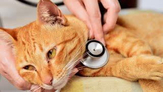 El primer gato con coronavirus