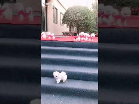 Cute Dogs Whatsapp Status _ Beautiful Little Dogs Funny Videos