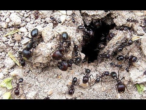 Karıncalarda Korunmanın Yolları