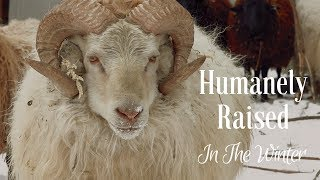 Humanely Raised In The Winter