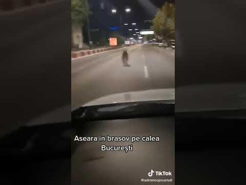 Urs Calea București