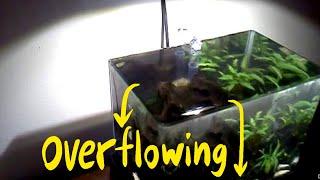Homemade Zeroedge Overflowing Fish Tank