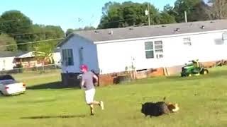 Cuando los animales atacan(humor)