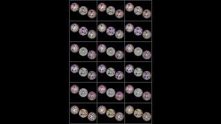 bisected Goldberg polyhedron(I n, m) & (I m, n)_analytic_all_3
