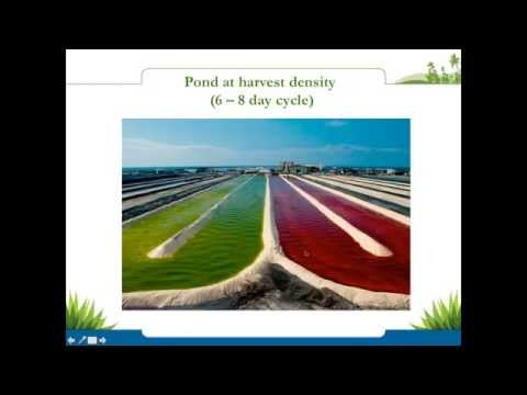 Astaxanthin Webinar -  Benefits of Taking this Powerful Antioxidant Daily | Nutrex Hawaii