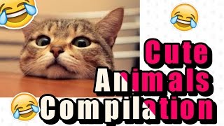 Cute Animals Compilation