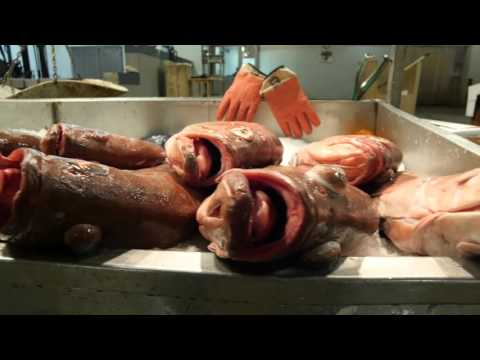 Promotional video for Fulton Fish Market in Hunt's Point, N.Y., Charlie Chalkin Productions.