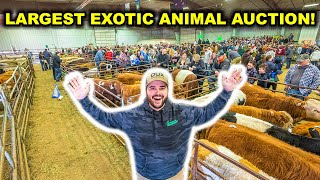 Buying EXOTIC BACKYARD FARM Animals at the World's LARGEST Exotic Animal AUCTION!!!