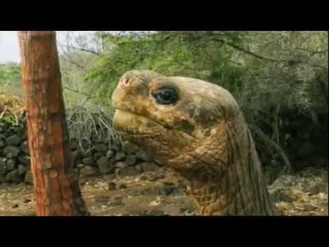 Lonesome George: The Last Tortoise of His Kind  - Equator - BBC