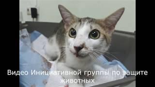 В Твери мужчина выбросил кошек с пятого этажа