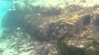 鳥取 浦富海岸にて撮影 砂底に謎の死骸を発見(2分20秒のところ)
