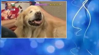 ハイジ 盲目のセラピー犬を訪ねカナダへ